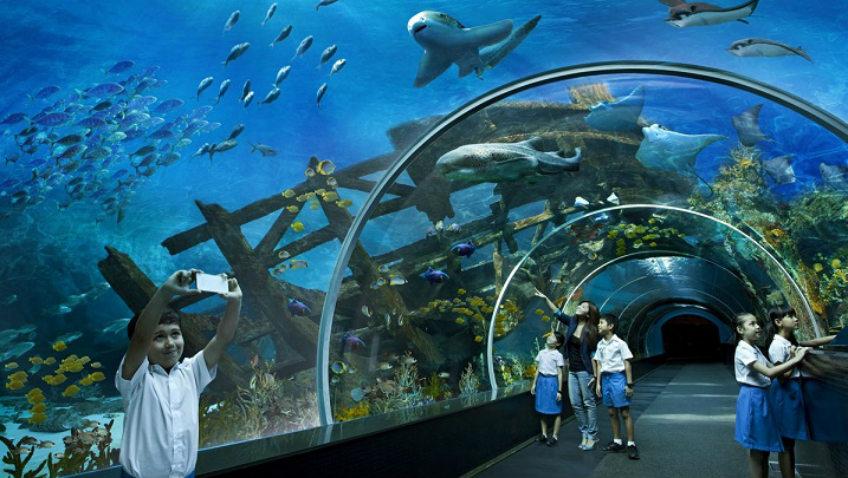 Kết quả hình ảnh cho Tri Nguyen Aquarium